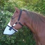 Nag Horse Ranch