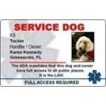 Service Dog Gear