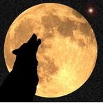 Wolf-moon.co.uk