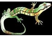Lizard King Arts coupons or promo codes at lizardkingarts.com