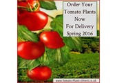 vegetableplantsdirect.co.uk coupons and promo codes